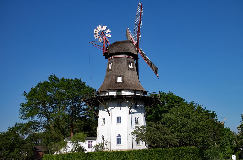 Bremen Sehenswürdigkeiten   21 Million Krokusse in Oberneuland